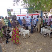 Zakat Foundation of America - Livestock: the Gift of Life for 1,000 Families