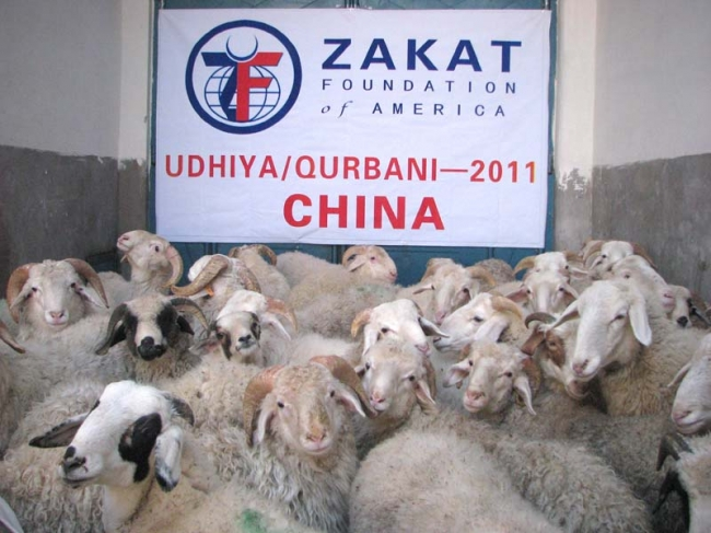 Zakat Foundation of America - 2011 Udhiya-Qurbani